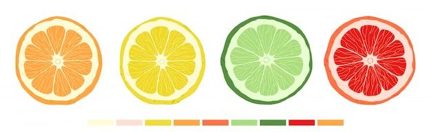 Ensemble de tranches d'agrumes de citron vert, orange, pamplemousse et citron.