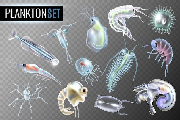 Ensemble transparent plancton