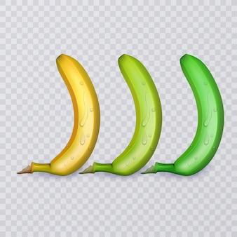 Ensemble de trois bananes, mûres, moyennement mûres et non mûres, illustration
