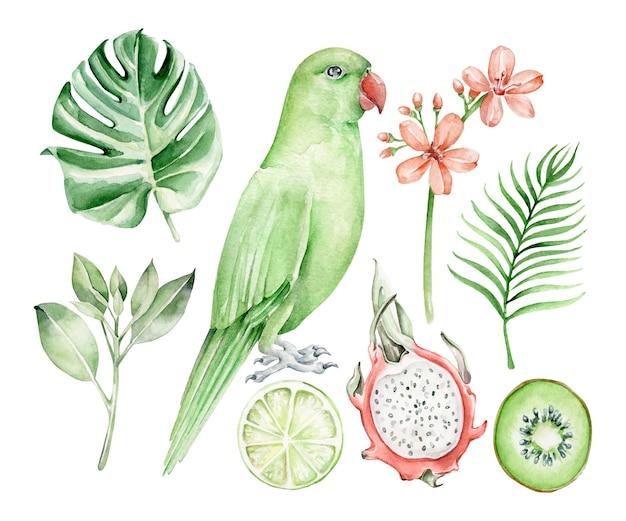 Ensemble tropical aquarelle