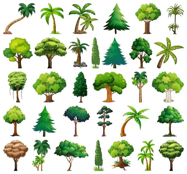 Ensemble de variétés de plantes et d'arbres