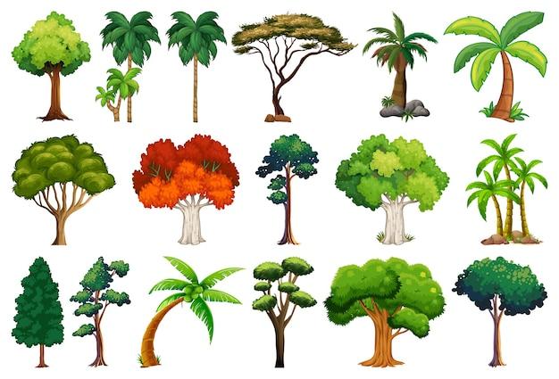 Ensemble de variétés de plantes et d & # 39; arbres