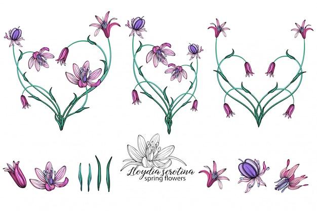 Ensemble de vecteur de délicates fleurs de printemps. fleurs. fleurs de printemps. coeur de fleurs.