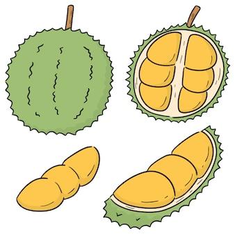 Ensemble de vecteur de durian