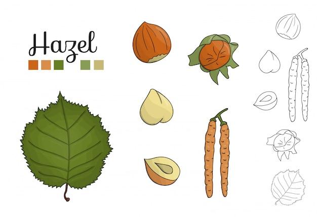 Ensemble de vecteur d'éléments noisetier isolés. illustration botanique de feuille de noisetier, brunch, fleurs, noix. clipart noir et blanc.