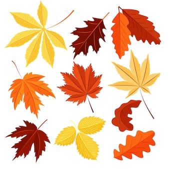 Ensemble de vecteur de feuilles d'automne isolé sur fond blanc