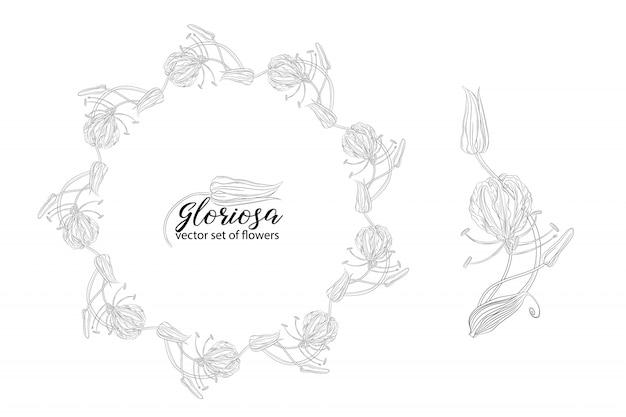 Ensemble de vecteur de fleurs et perles glorasa gloriosa