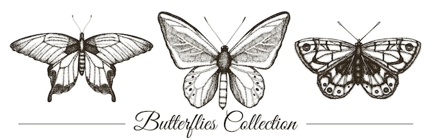 Ensemble de vecteur de papillons noir et blancs dessinés à la main. gravure illustration rétro. insectes réalistes isolés