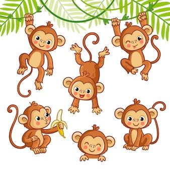 Ensemble de vecteur avec singe dans différentes poses collection d'animaux de vecteur en style cartoon