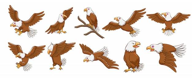 Ensemble de vecteurs eagle