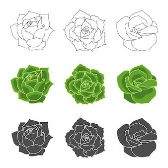 Ensemble de vecteurs d'echeveria succulentes illustration de fleur du désert dessinée à la main dans un style plat et doodle