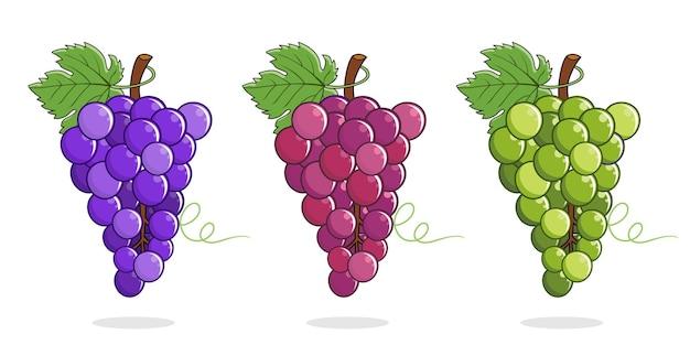 Ensemble de vecteurs d'illustrations de raisins