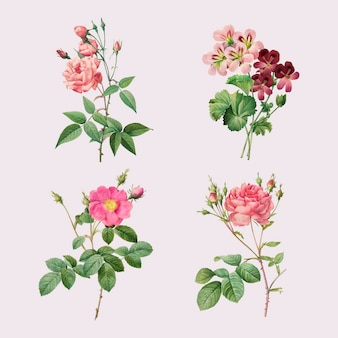 Ensemble De Vecteurs Vintage Rose Et Géranium Vecteur gratuit