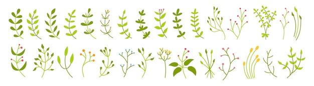 Ensemble vert botanique de branche et de feuille. résumé des différents éléments de beau design floral. collection éco de dessin animé floral plat coloré. belles pousses de verts isolés. illustration