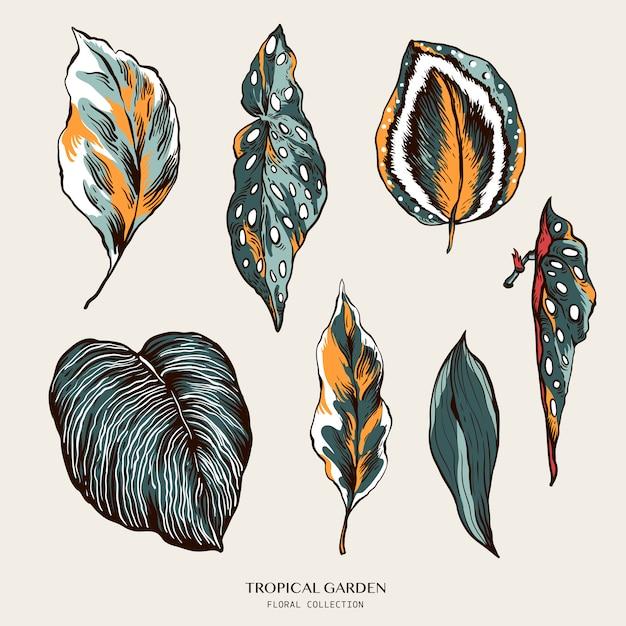 Ensemble vintage de feuilles tropicales. collection exotique de plantes d'intérieur naturelles