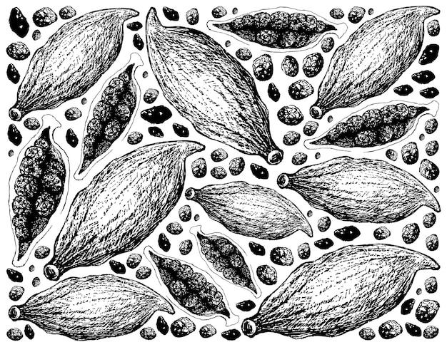 Entier et demi de fond de gousses de cardamome fraîche