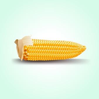 Épi de maïs mûr.