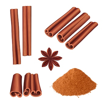 Épices à la cannelle. herbes dessert nourriture aromatique bâton écorce de cannelle illustration vectorielle