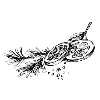 Épices de croquis dessinés à la main.