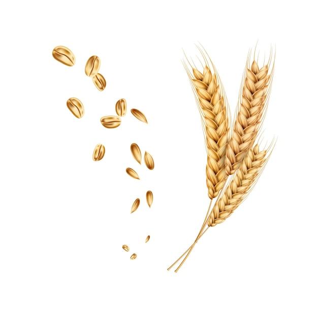 Épillets D'épis De Blé Avec Grains Vecteur Premium