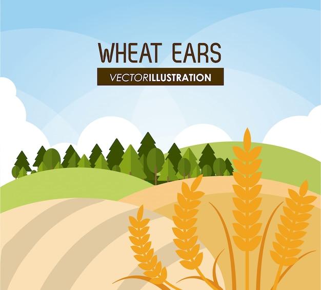 Épis de blé, concept agricole et agricole, ve