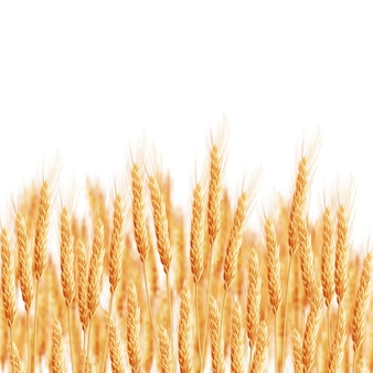 Épis de blé avec espace pour le texte.