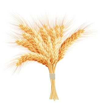 Épis de blé isolés sur fond blanc.