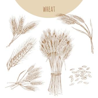 Épis, gerbe et grains de blé. croquis de céréales dessin dessiné à la main.