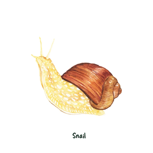 Escargot dessiné main isolé sur fond blanc