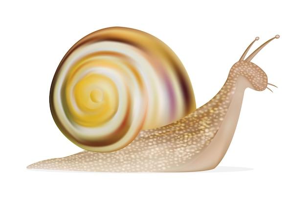 Escargot sur fond blanc