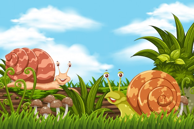 Escargots dans la jungle
