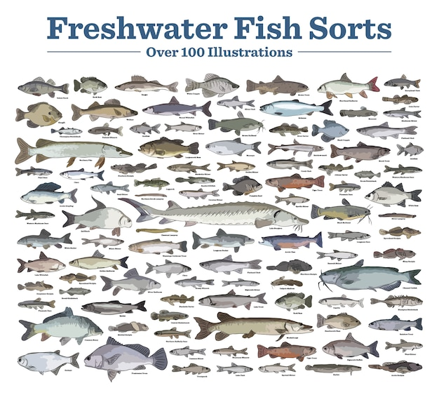 Les espèces de poissons