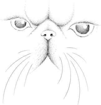 Esquisse du visage de chat