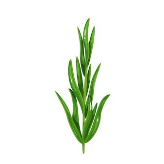 Estragon vert, nourriture végétarienne, menu sain. épices d'herbes, salade et repas. illustration vectorielle isolée en style cartoon.