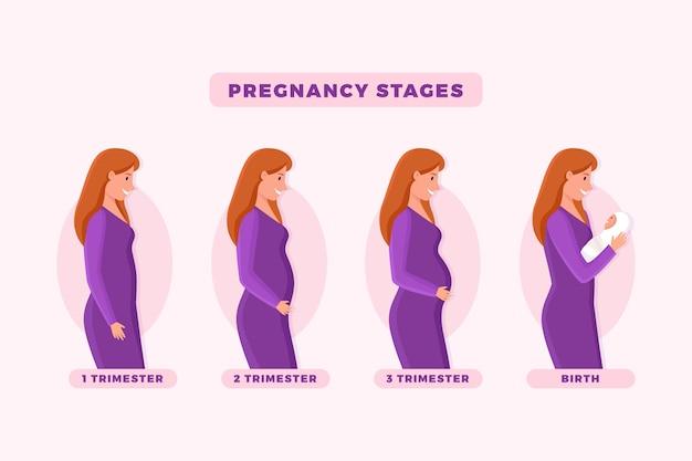 Les étapes de la grossesse illustrées