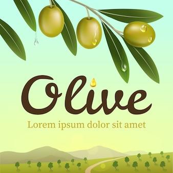 Étiquette d'olives vertes avec une branche d'olivier réaliste sur fond de ferme d'olives. illustration