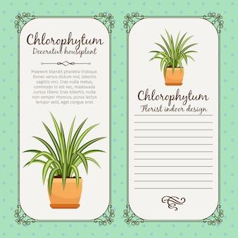 Étiquette vintage avec plante chlorophytum
