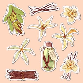 Étiquettes isolées d'épice de vanille naturelle
