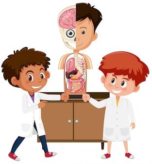 Étudiant, apprentissage, anatomie, sur, blanc, fond