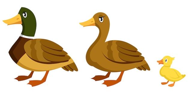 Famille de canard en style cartoon. oiseaux de ferme de sexe et d'âge différents.