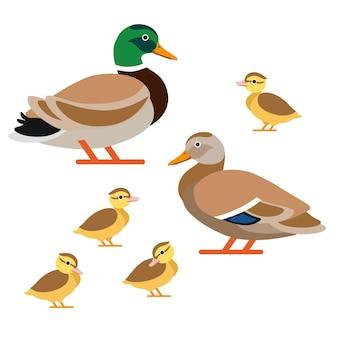 Famille de canards en style vectoriel : canard, canard et canetons.