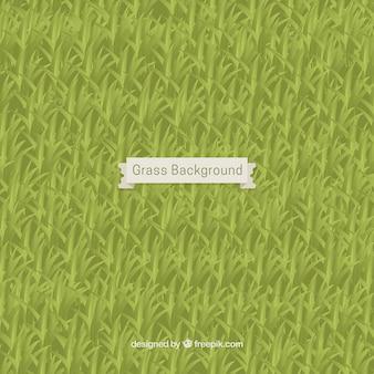 Fantastique fond herbe design plat