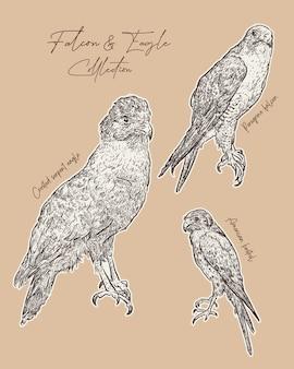 Faucon et aigle croquis dessiner à la main.