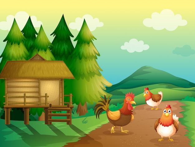 Une ferme avec des poules et une maison natale