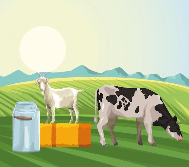 Ferme vache mangeant herbe chèvre boîte métallique lait et foin champ