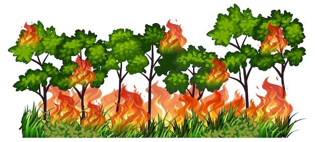 Feu de nature arbre isolé