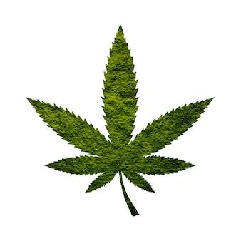 Feuille de cannabis isolé sur fond blanc
