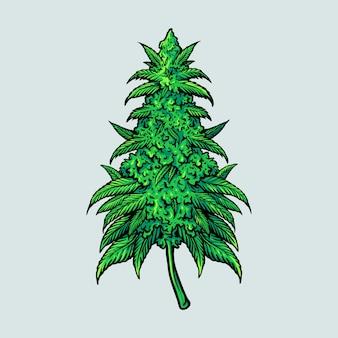 Feuille de cannabis médical