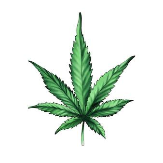 Feuille de cannabis verte feuille de cannabismarijuana