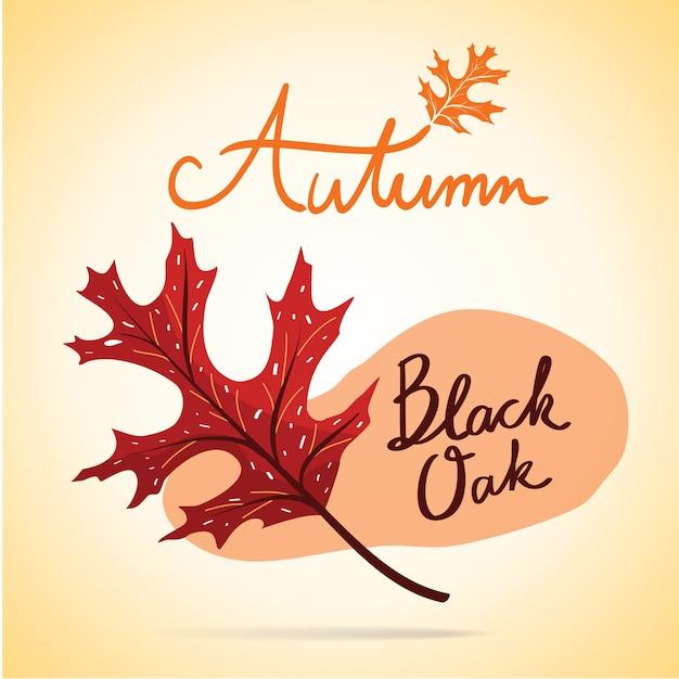 Feuille de chêne noir d'automne